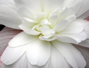 eindeloos-bewust-zijn-pim-van-lommel-witte-bloem